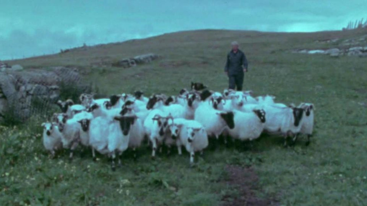 The Shepherds of Berneray
