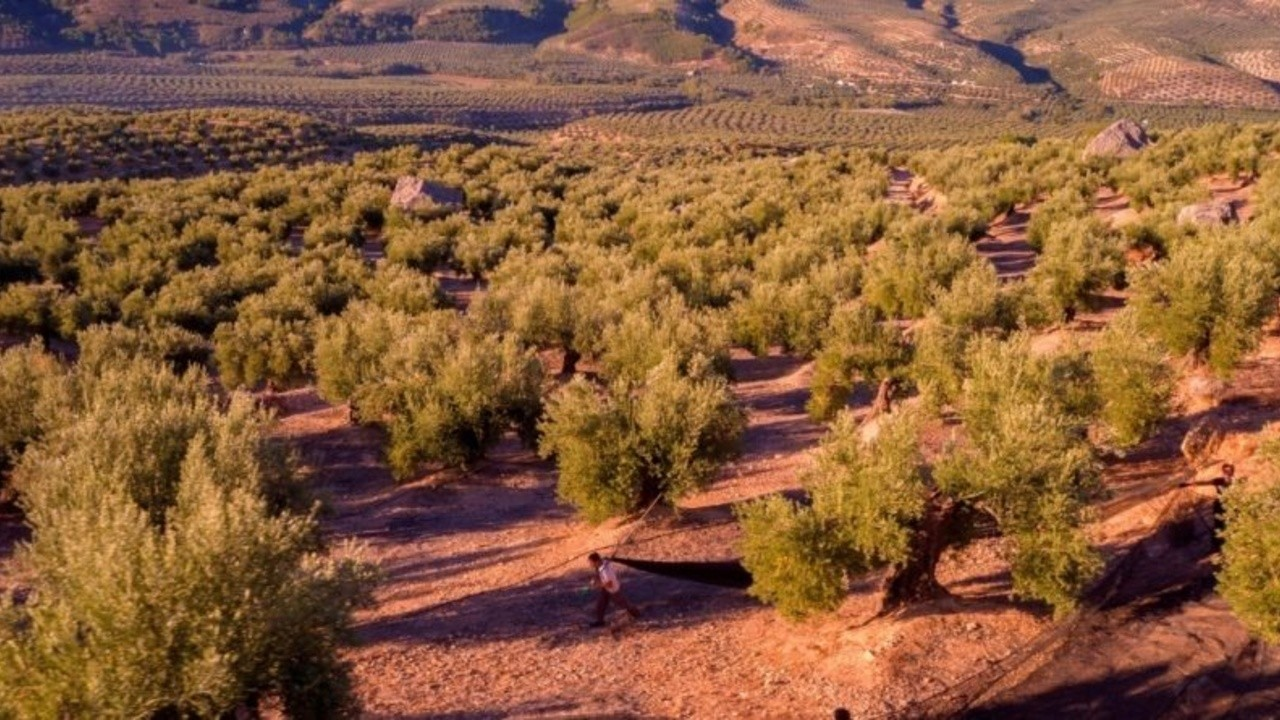 Virgin and Extra: The Land of Olive Oil