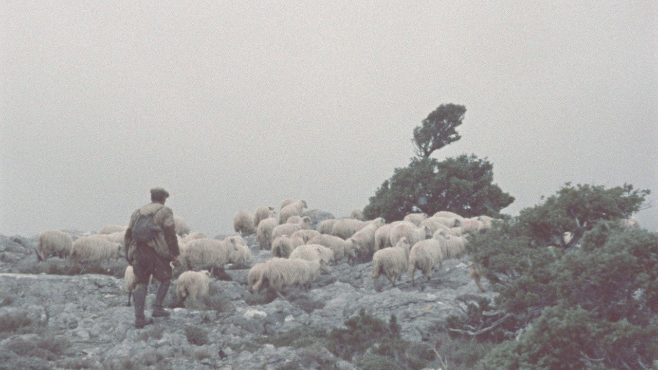 Shepherds of Orgosolo
